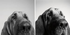 libro-retratos-perros-envejeciendo-amanda-jones-1