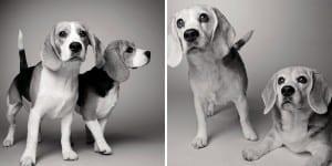 libro-retratos-perros-envejeciendo-amanda-jones-12