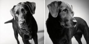 libro-retratos-perros-envejeciendo-amanda-jones-2