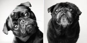 libro-retratos-perros-envejeciendo-amanda-jones-3-2