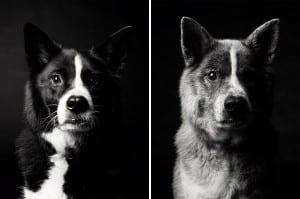 libro-retratos-perros-envejeciendo-amanda-jones-5