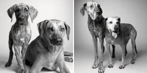 libro-retratos-perros-envejeciendo-amanda-jones-6