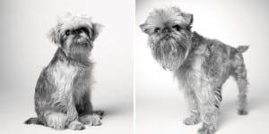 libro-retratos-perros-envejeciendo-amanda-jones-7