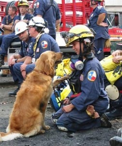 perro-rescate-11s-superviviente-16-cumpleanos-bretagne-5