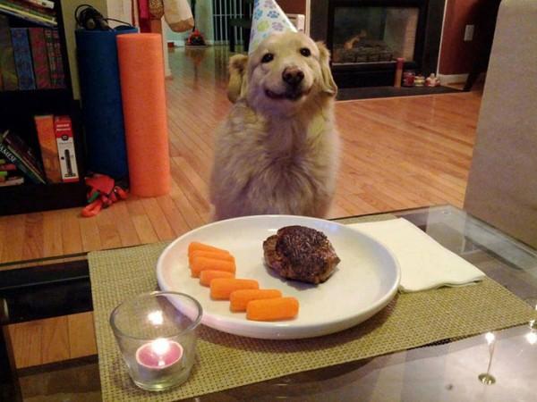 perros-sonrientes-12