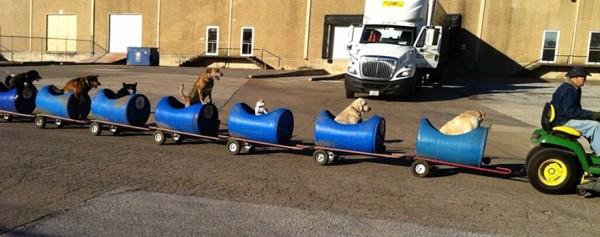 tren-tractor-perros-callejeros-rescatados-eugene-bostick-1