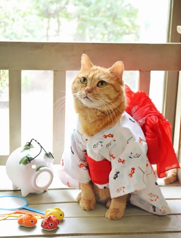Gatos-en-Kimono