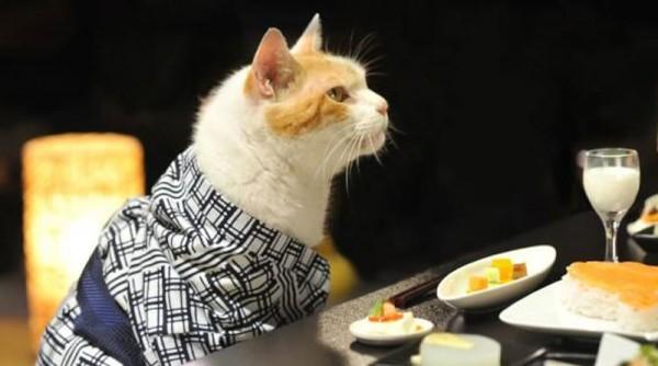 adorables-fotos-de-gatos-vestidos-con-kimonos