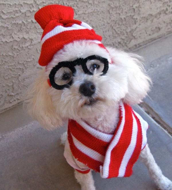 disfraces-caseros-para-mascotas-halloween-donde-esta-wally