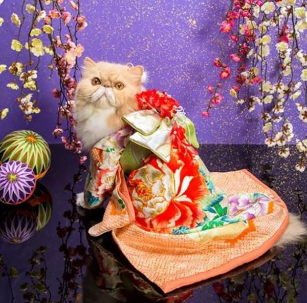 gatos-kimonos-japon-20