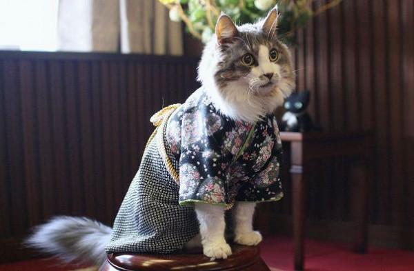 gatos-kimonos-japon-3