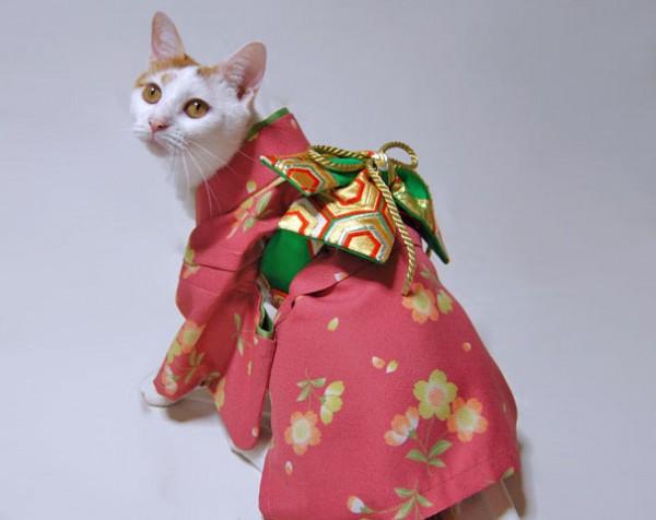 gatos-kimonos-japon-6