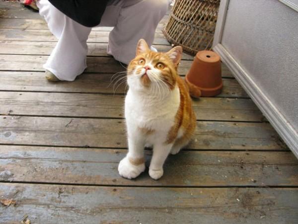 gatos-con-picaduras-de-abejas-6