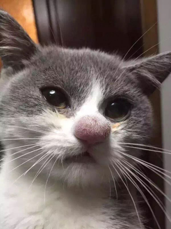 gatos-con-picaduras-de-abejas-7