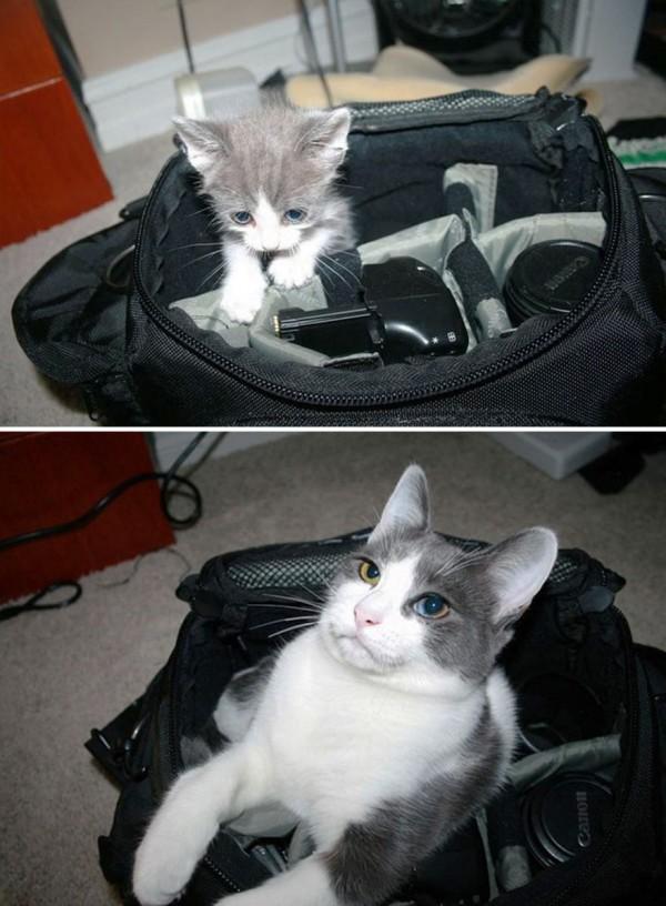 gatos-creciendo-antes-despues-1-2