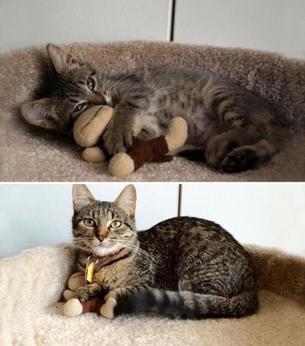 gatos-creciendo-antes-despues-20-2