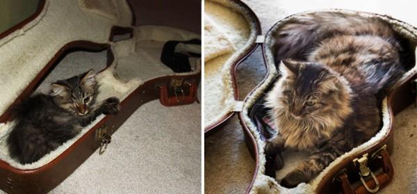 gatos-creciendo-antes-despues-25