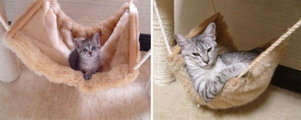 gatos-creciendo-antes-despues-7