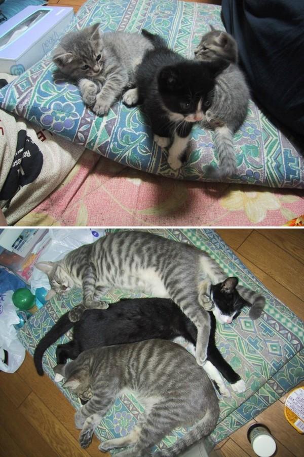 gatos-creciendo-antes-despues-8-2