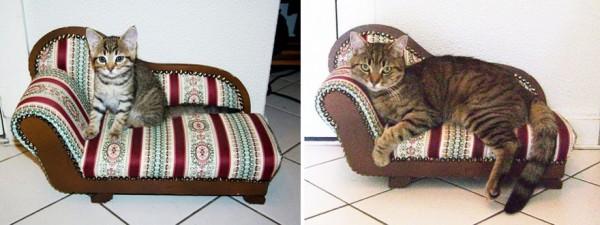 gatos-creciendo-antes-despues-9