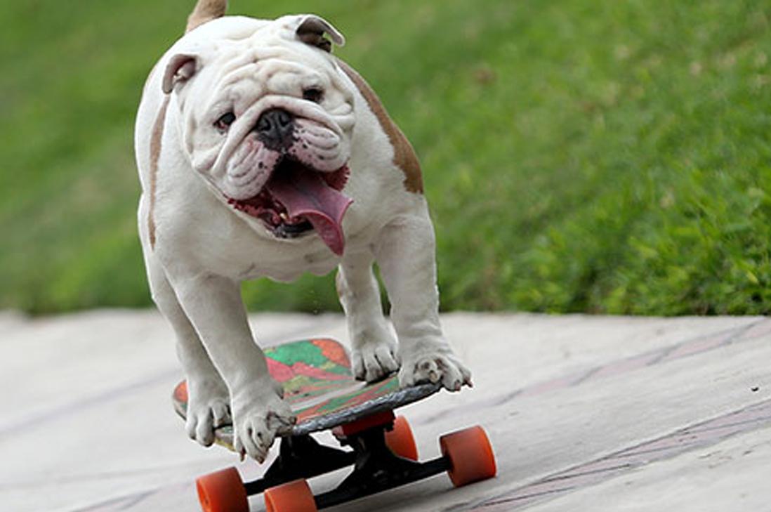 Bulldog skater bate récord Guinness