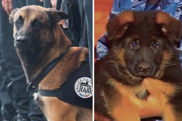 La muerte de Diesel llamó la atención en las redes sociales e incluso muchas personas usaron en Twitter el hashtag #JeSuisChien (Yo soy perro).