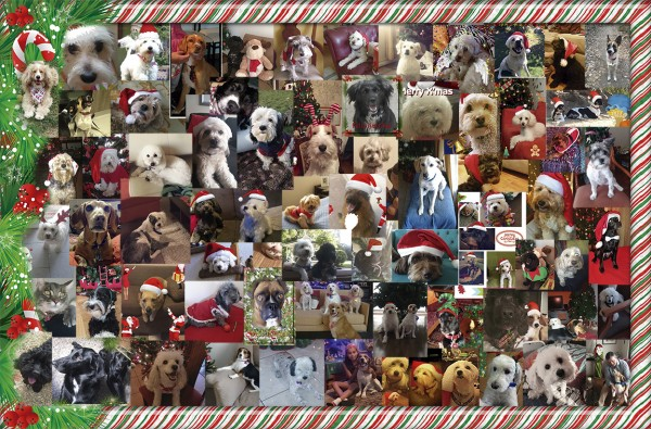 Perritos adoptados dedican collage navideño a su rescatadora | Infogate