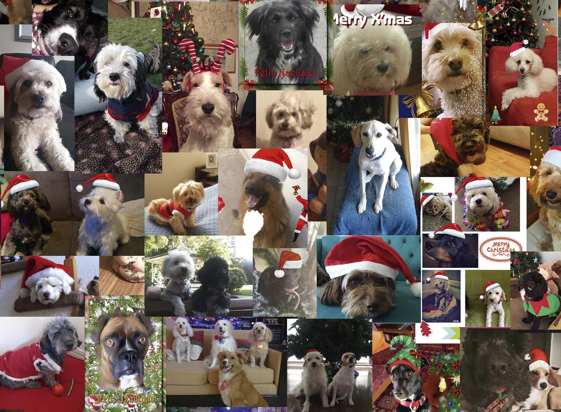 Perritos adoptados dedican collage navideño a su rescatadora