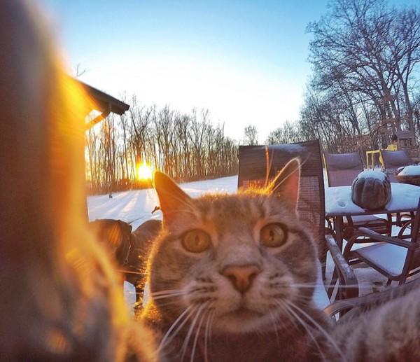 gato-manny-selfies-camara-gopro-3