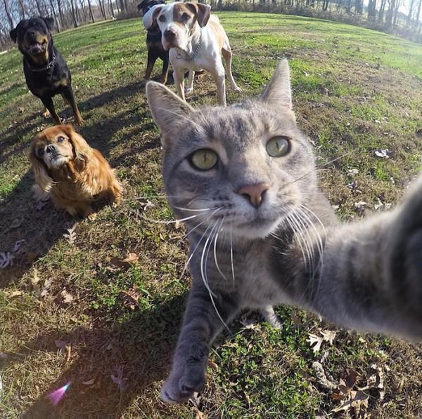 gato-manny-selfies-camara-gopro-5