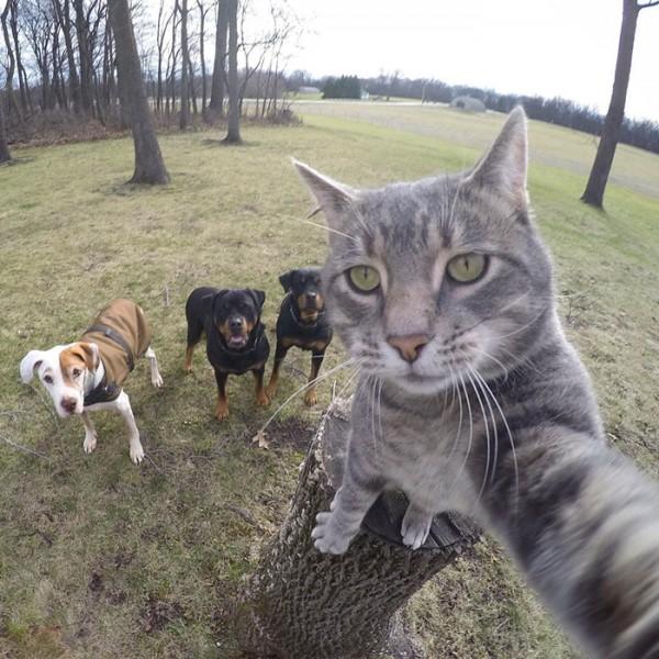gato-manny-selfies-camara-gopro-7