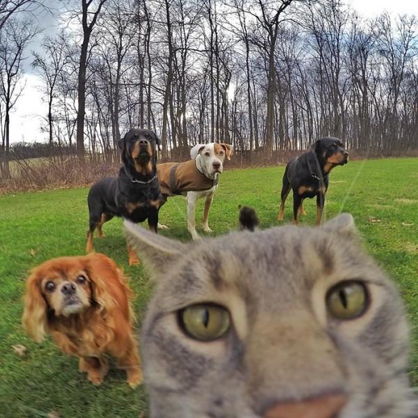 gato-manny-selfies-camara-gopro-8