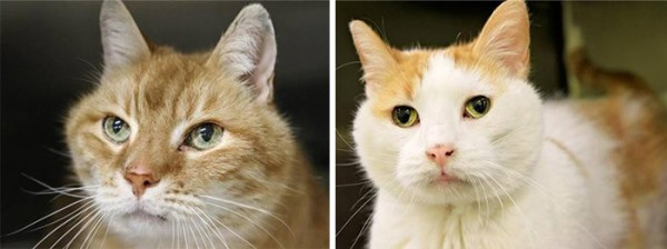 gatos-ancianos-max-mojo-adoptados-maryland-2