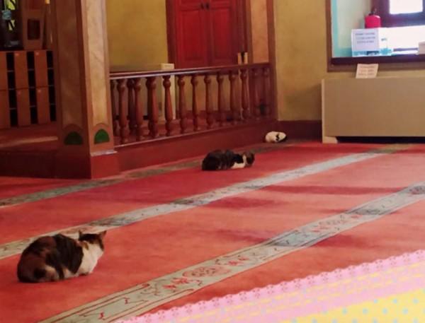 mezquita-gatos-callejeros-mustafa-efe-estambul-5