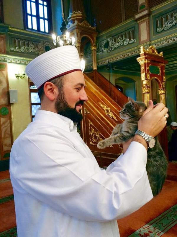 mezquita-gatos-callejeros-mustafa-efe-estambul-6