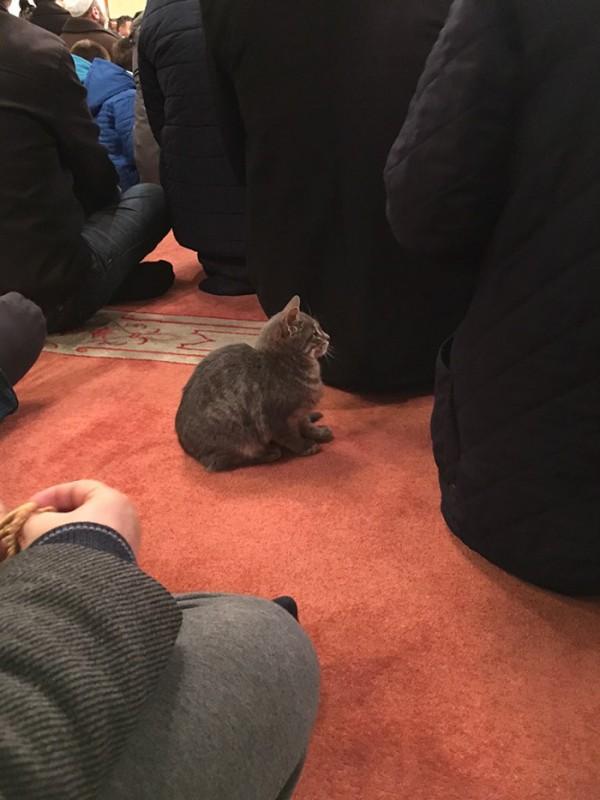 mezquita-gatos-callejeros-mustafa-efe-estambul-7