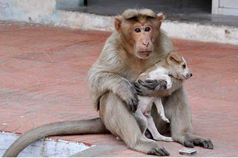 Esta Mamá mono adoptó un perrito y lo cuida como su propio hijo