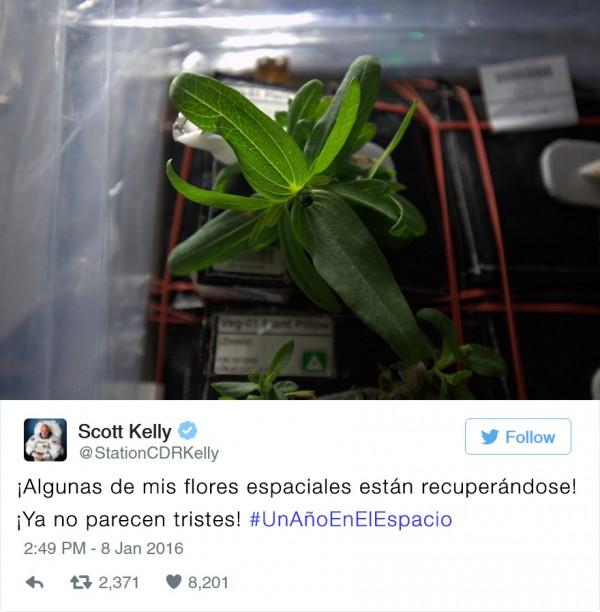 primera-flor-espacio-nasa-scott-kelly-2