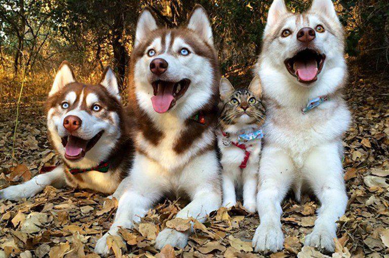 Tres perros salvan a gato y se vuelven los mejores amigos