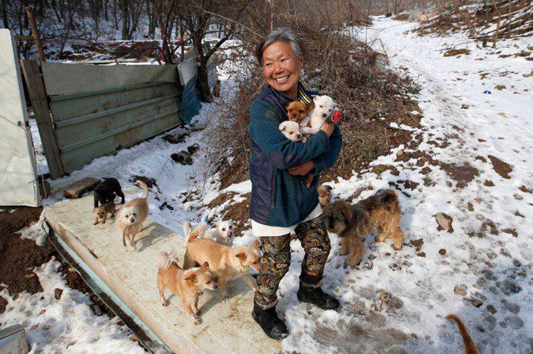 Mujer surcoreana rescató 200 perros que iban a ser devorados.