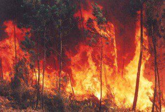 CONAF advierte: Valparaíso, Viña del Mar, Quilpué, Villa Alemana y San Antonio son las comunas de más alto riesgo de incendios forestales