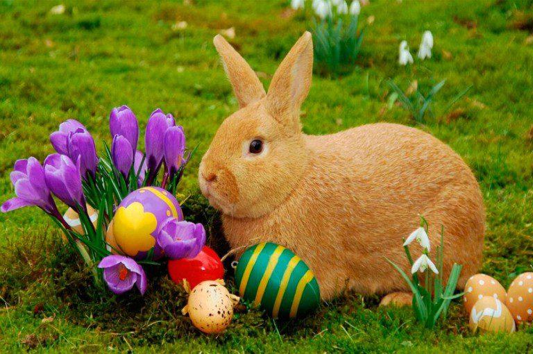 ¿De dónde proviene el Conejo de Pascua?