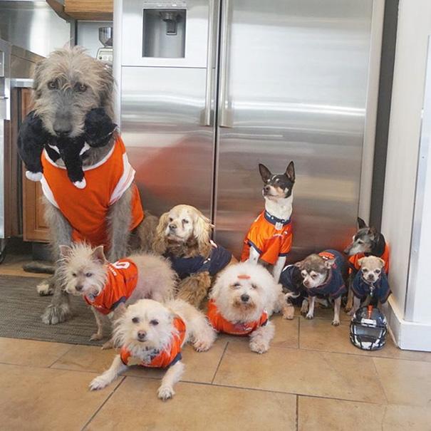 familia-perros-ancianos-adoptados-steve-greig-13