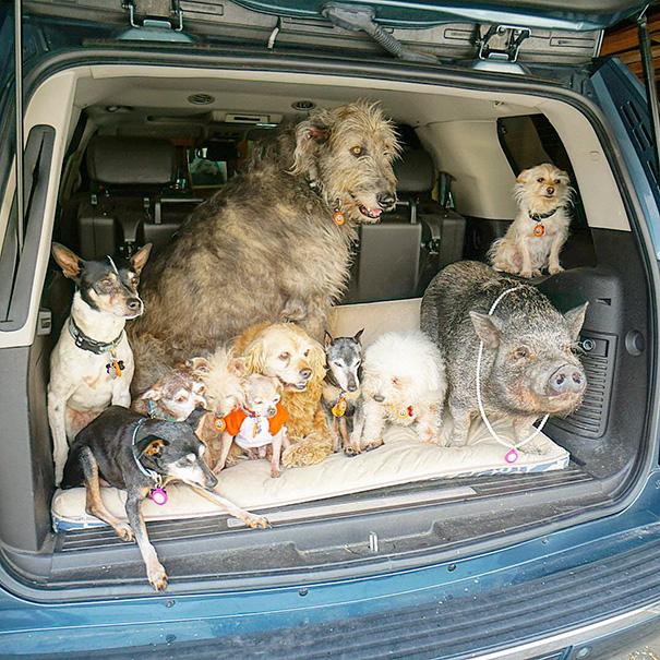 familia-perros-ancianos-adoptados-steve-greig-15