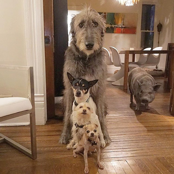 familia-perros-ancianos-adoptados-steve-greig-7