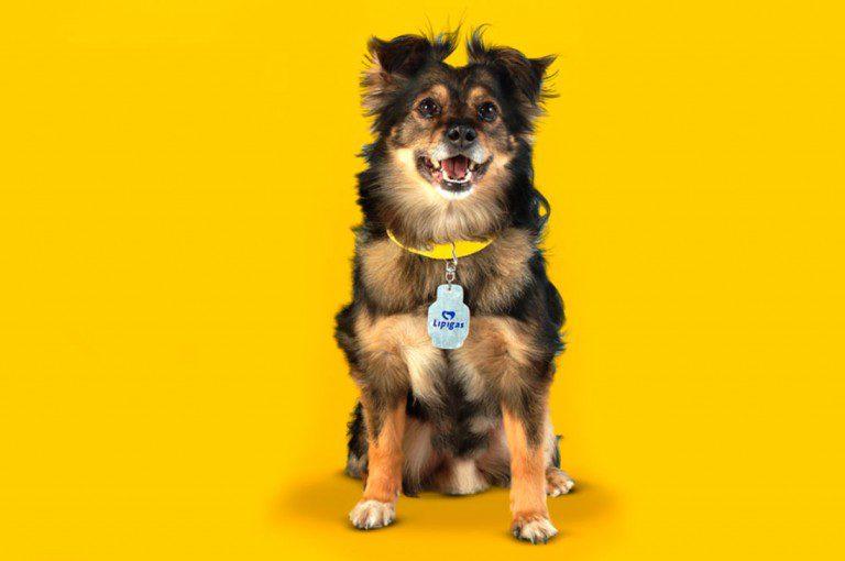 Spike, el perro de Lipigas falleció este jueves