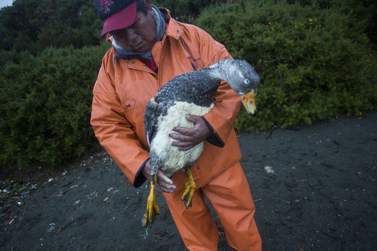 (Fotos y video) El recorrido que hizo Greenpeace en Chiloé