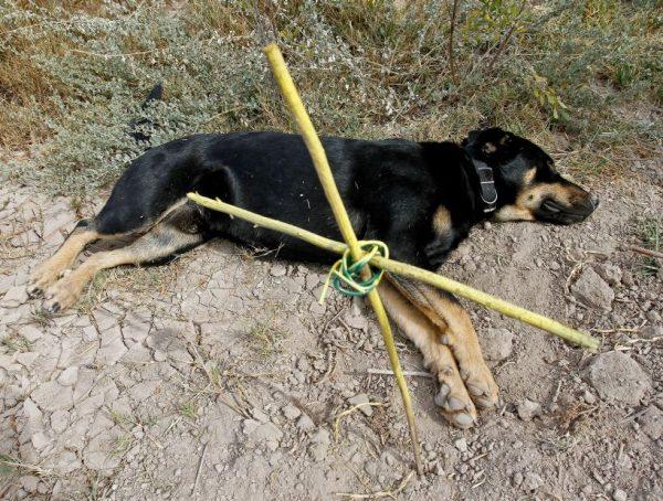 Perro que ayudo a enterrar a otro perro