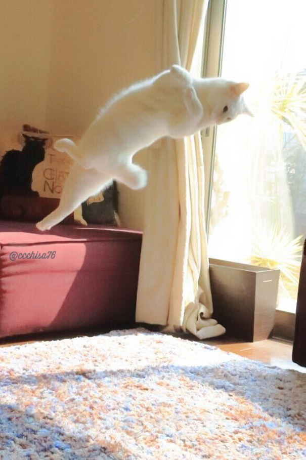 gato-bailarin-japon-6