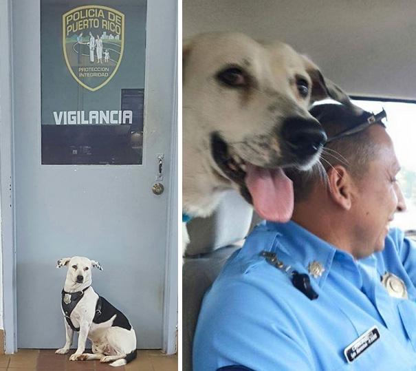 perro-callejero-gorgi-adoptado-policia-puerto-rico-1